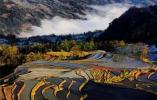 """好消息~浙江又有两处湿地公园正式成为""""国家级"""""""