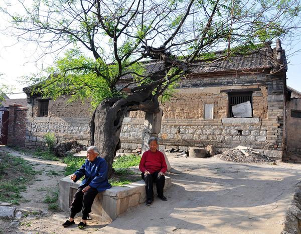 莱芜千年古槐树