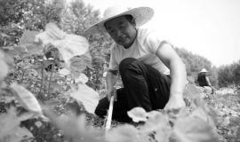 种植中草药 脱贫奔小康
