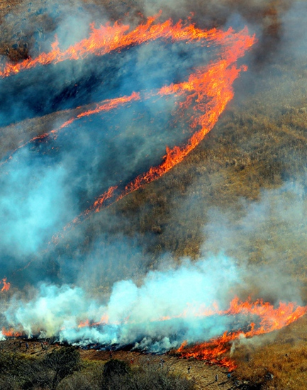 日本山口县秋吉台举行一年一度的烧山活动