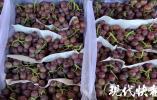 南京人每天吃掉2000多吨秋果,钟爱的竟是这一种