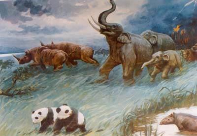 剑齿象-熊猫动物群