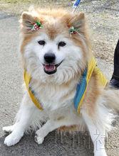 2010年12月吉尼斯长寿狗Pusuke