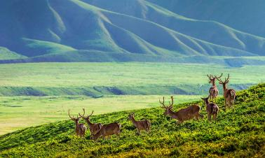 Red deer gather at foot of Qilian Mountain