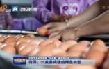 """中央生态环保督察""""回头看""""整改在山东丨菏泽:一家养鸡场的绿色转型"""