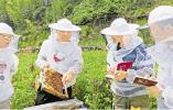 酷暑下,养蜂博士的三味人生