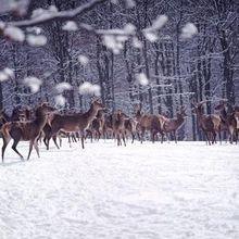 亚寒带针叶林气候