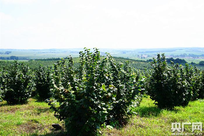 长春市发展林果业助力乡村振兴