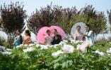 国花旗袍的邂逅 红色乡愁的回忆--大众网拍客摄影活动