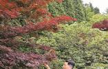 """在林场工作生活近40年 他见证了""""浙东绿肺""""的变迁"""