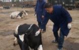 山东出台意见: 原则上每10个村设1名动物防疫员